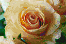 Apricot Rose - Mosaic Tile Art