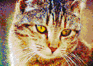 Bernice the Cat - Mosaic Tile Art