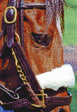 Race Horse Face (Lexington, Kentucky) - Mosaic Tile Art