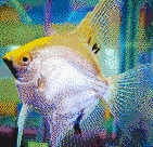 Gold Angelfish - Mosaic Tile Art