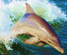 Dolphin Jumping in Wake - Mosaic Tile Art
