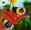 Peacock Butterfly Wing - Tile Mosaic