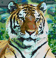 Siberian Tiger - Mosaic Tile Art