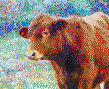 Simmental Calf (Cow) - Framed Mosaic Wall Art