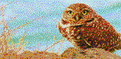 Burrowing Owl - Framed Mosaic Wall Art