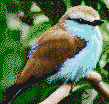 Blue Breasted Bird - Framed Mosaic Wall Art