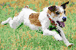 Terrier Racing - Framed Mosaic Wall Art