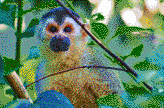 Central American Squirrel Monkey - Framed Mosaic Wall Art