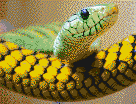 Snakehead - Framed Mosaic Wall Art