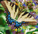 Swallowtail Butterfly - Framed Mosaic Wall Art