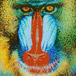 Mandrill Baboon Face - Framed Mosaic Wall Art