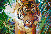 Sumatran Tiger - Framed Mosaic Wall Art