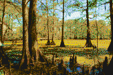 Louisiana Swamp - Framed Mosaic Wall Art