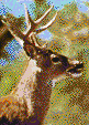 Whitetail Stag - Framed Mosaic Wall Art