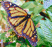 Monarch Butterfly - Framed Mosaic Wall Art