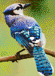 Blue Jay - Framed Mosaic Wall Art