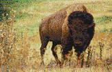 American Bison - Framed Mosaic Wall Art